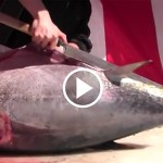 Japanese Tuna Cutting Show by Sword-like Knife